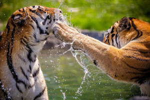I'd rather take a head slap from a tiger than some of what my subconscious throws at me.